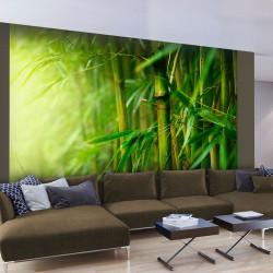 Fototapeta  džungle  bambus