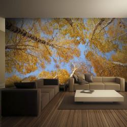 Fototapeta - Autumnal treetops