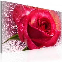 Obraz  Lady Rose