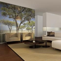 Fototapeta - Acacia trees - Serengeti, Africa