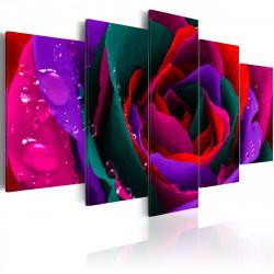 Obraz  Multicoloured rose