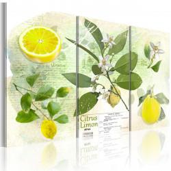 Obraz  Fruit lemon