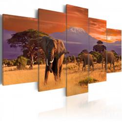 Obraz  Africa Elephants
