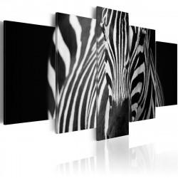 Obraz  Zebra look