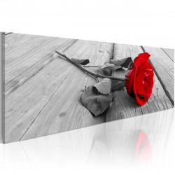 Obraz  Carmine rose