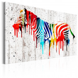 Obraz  Colourful Zebra