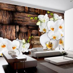 Fototapeta - Blooming orchids