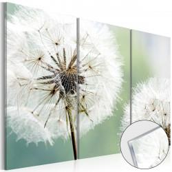 Obraz na akrylátovém skle  Fluffy Dandelions [Glass]