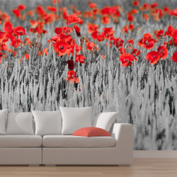 Fototapeta  Red poppies on black and white background