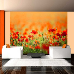 Fototapeta  Poppies in shiny summer day