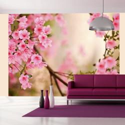 Fototapeta  Pink azalea