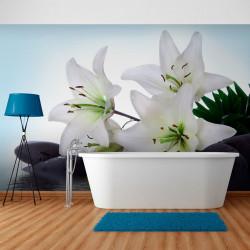 Fototapeta  Pure, white lilies