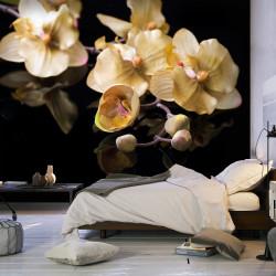 Fototapeta - Orchids in ecru color