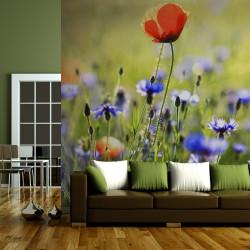 Fototapeta  A meadow with a poppy among bluets