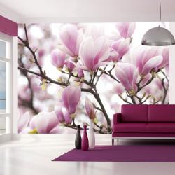 Fototapeta  Magnolia bloosom