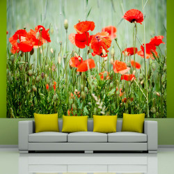 Fototapeta  Field of red poppies