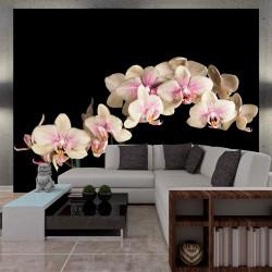 Fototapeta  Blooming orchid