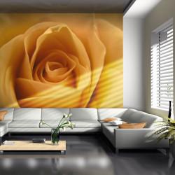Fototapeta  Yellow rose – a symbol of friendship