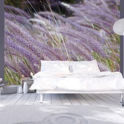 Fototapeta  Green field and purple flowers