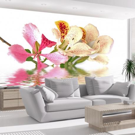 Fototapeta  Tropical flowers  orchid tree (bauhinia)