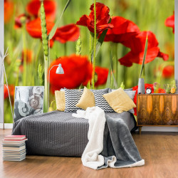 Fototapeta  Cereal field with poppies