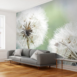 Fototapeta  Two dandelions