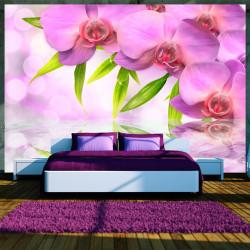 Fototapeta - Orchids in lilac colour
