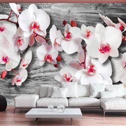 Fototapeta - Callous orchids