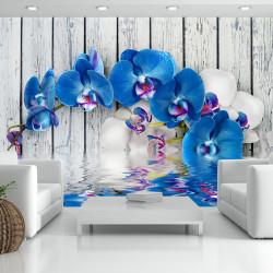 Fototapeta - Cobaltic orchid
