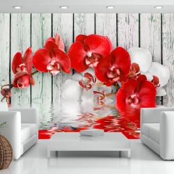 Fototapeta - Ruby orchid