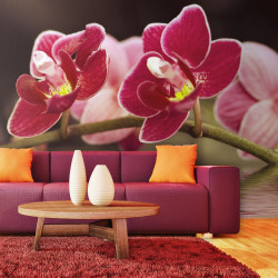 Fototapeta  Beautiful orchid flowers on the water