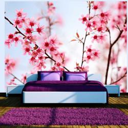 Fototapeta  Symbol of Japan  sakura flowers