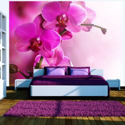 Fototapeta  Pink orchid