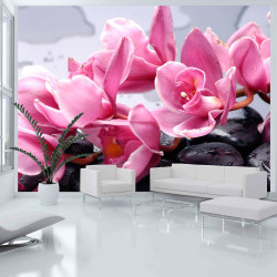 Fototapeta - Orchid flowers with zen stones