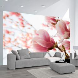 Fototapeta  Pink magnolia