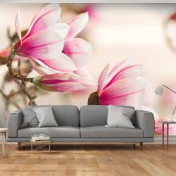 Fototapeta  Branch of magnolia tree