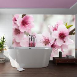 Fototapeta  Spring, blooming tree  pink flowers
