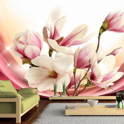 Fototapeta   Magnolia In Rays