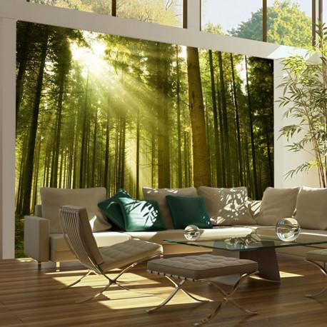 Fototapeta  Pine forest