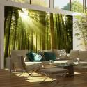 Fototapeta - Pine forest