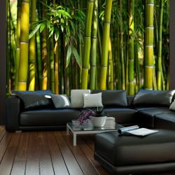 Fototapeta  Asian bamboo forest