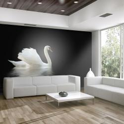 Fototapeta  labuť (černobílý)