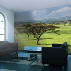 Fototapeta - African trees