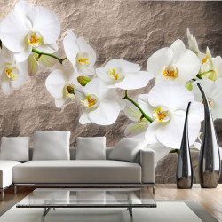 Fototapeta - Purity of the orchid
