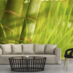 Fototapeta  bambus  příroda zen