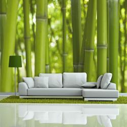 Fototapeta  bambus  zelený