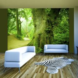 Fototapeta  Forest pathway