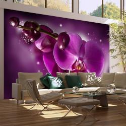 Fototapeta - Pohádka a orchidea
