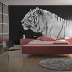 Fototapeta  White tiger