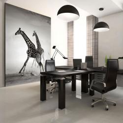 Fototapeta  Žirafy